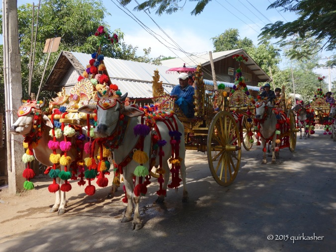 Ox carts all decked out for the procession