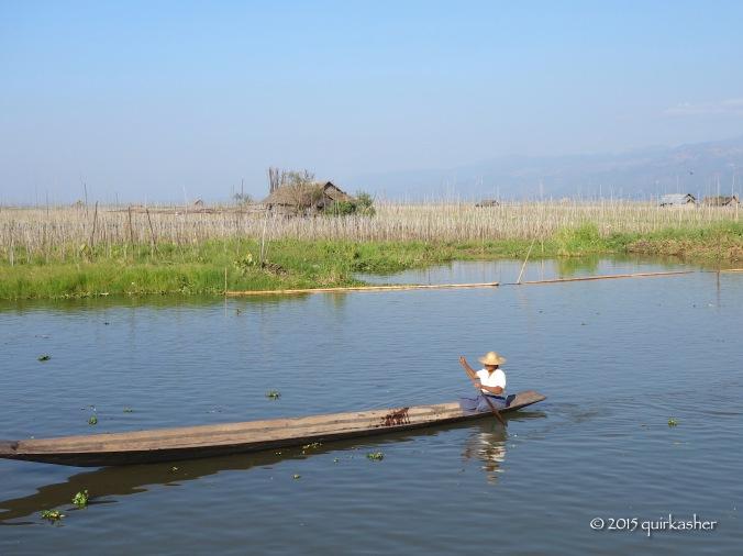 Floating garden of Inle Lake