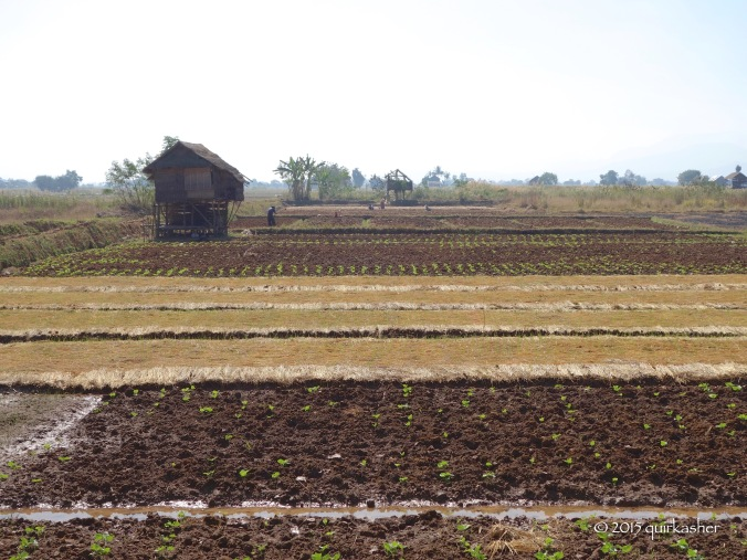 Ensuring variety of crops