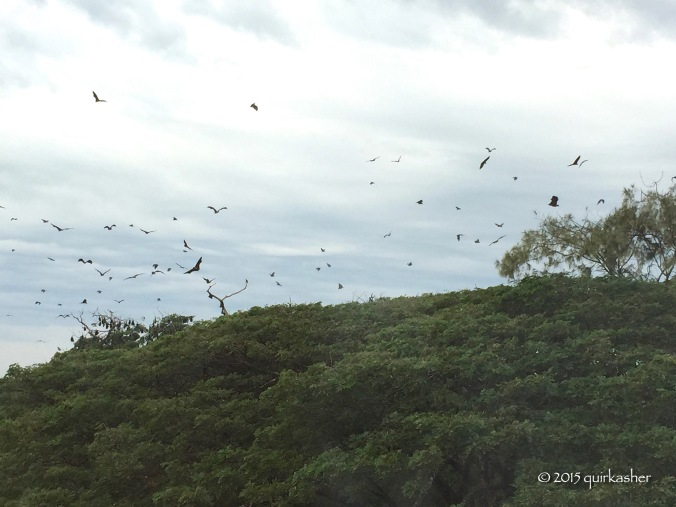 Bats of Sittwe