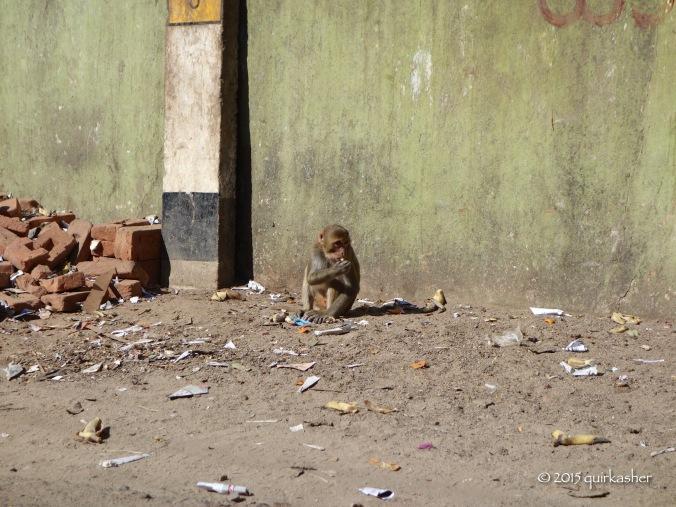 Monkey of Taung Kalat