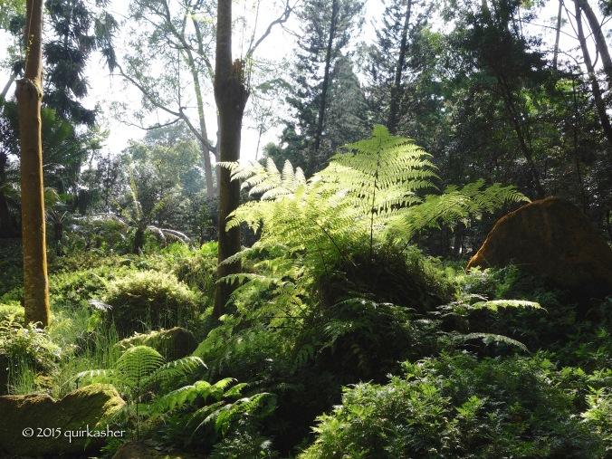 Ferns at the Evolution Garden