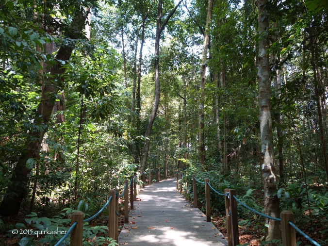 The gardens' own tract of primary rainforest