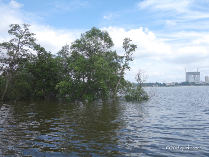 Mangrove forest extending into the Straits of Johor