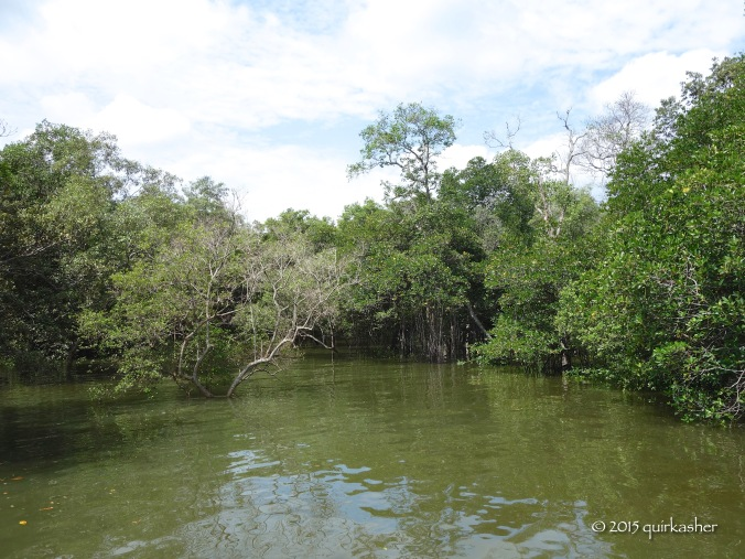 Mangrove forest in the new extension