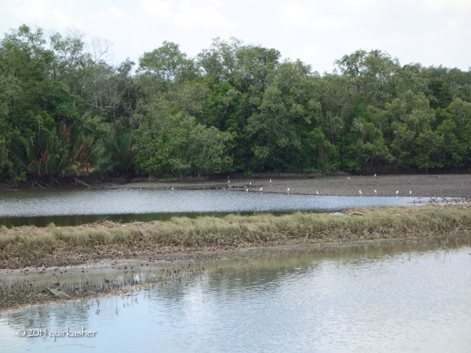 Wetland waterbirds