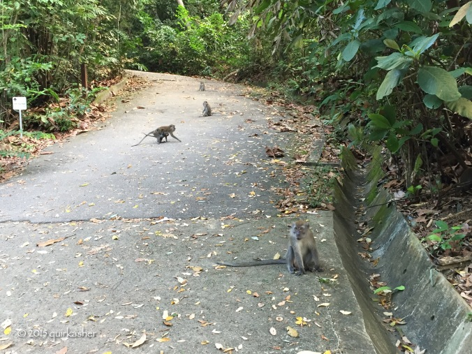 Local monkeys guarding the approach to the TreeTop Walk
