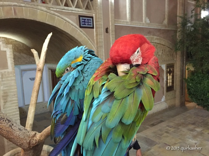 Sleepy parrots