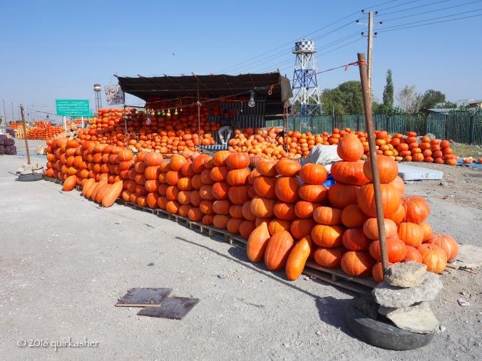 Pumpkins were in season